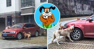 Pateó a un perro callejero y este regresó con todos sus amigos para destruirle el coche