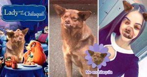 La historia detrás del perrito más famoso de Internet: El Chilaquil; aquí sus mejores MEMES