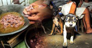 Fotógrafo retrata la brutal industria de la carne de perro en Tailandia; las imágenes son crueles