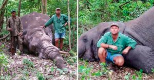 Cazador le dispara a un elefante y a sus bebés; el karma no tarda y muere aplastado por el animal