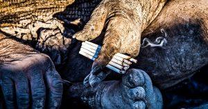 Tiene 60 años sin bañarse, fuma caca de animales y es el soltero más codiciado de Irán