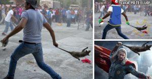 20 Memes del Tlacuache que alguien usó como arma en la manifestación de Oaxaca