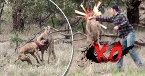 Rescató a su perro: un canguro lo estrangulaba y este héroe lo retó a una pelea de box